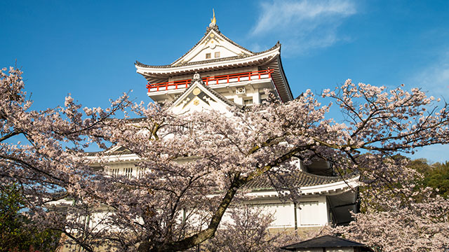 桜(熱海城)