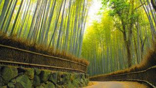 京都 竹林の道(小径)時間をかけて歩きたい風情ある小道