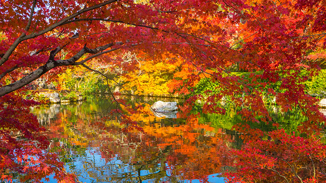 鮮やかな紅葉(永観堂)