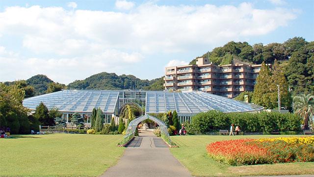 鑑賞温室(フラワーセンター大船植物園)