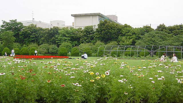 芝生広場(フラワーセンター大船植物園)