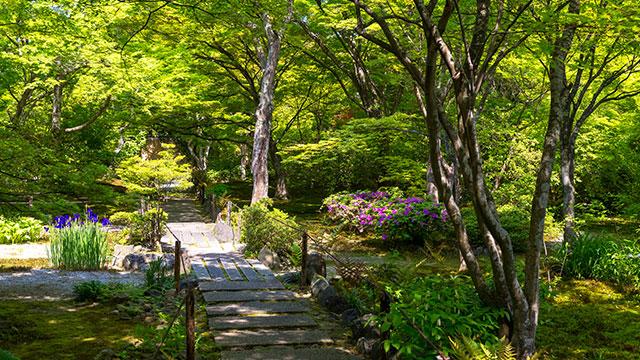 庭園(宝筐院)