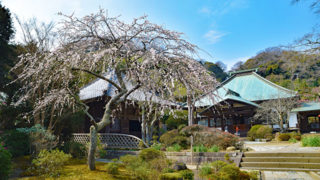 鎌倉 海蔵寺四季折々の花が楽しめる美しい寺院