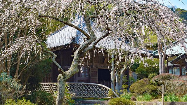薬師堂(海蔵寺)