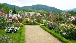 河津バガテル公園フランスの公園を再現したバラの名所