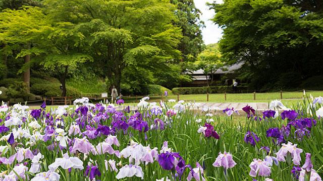 本堂後庭園(明月院)