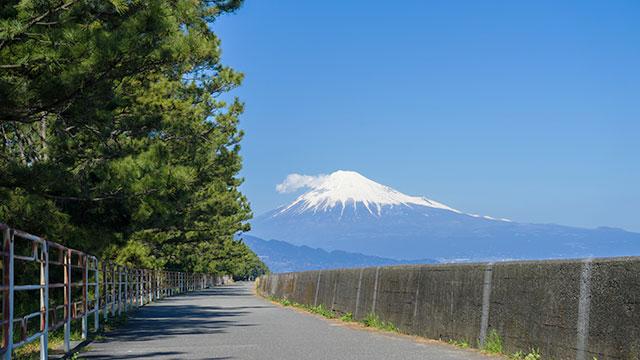 遊歩道(三保の松原)