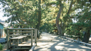 静岡 神の道羽衣の松から御穂神社へ続く松並木の参道