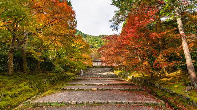 紅葉で美しい二尊院の馬場(嵯峨野トロッコ列車)