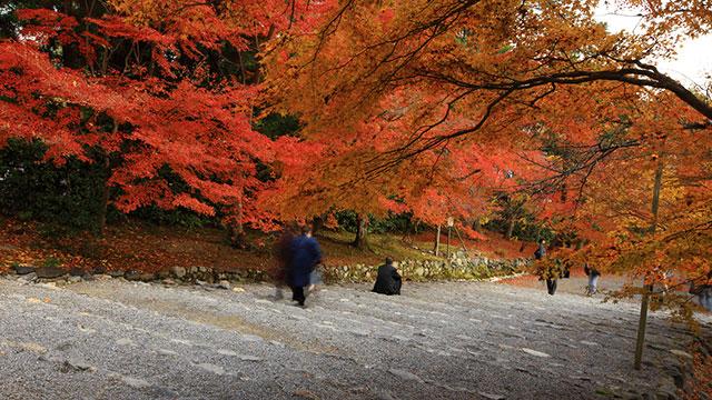 鮮やかな紅葉の馬場(二尊院)