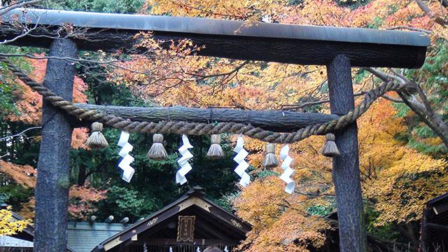 黒木鳥居(野宮神社)
