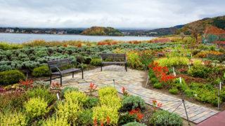 河口湖 大石公園花と富士山が楽しめる絶景スポット