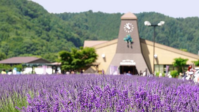 河口湖自然生活館(大石公園)