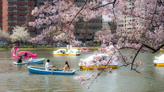 ボート遊び(不忍池)
