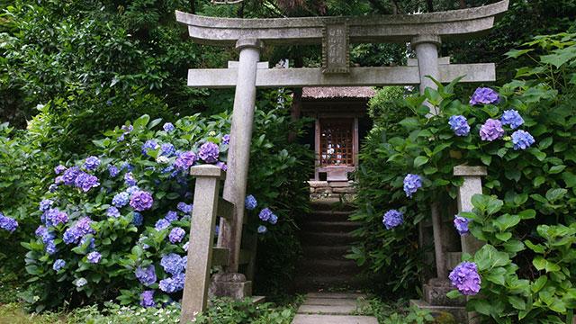 権現堂(杉本寺)