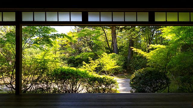 本堂から庭を望む(滝口寺)