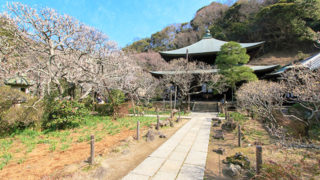 鎌倉 瑞泉寺夢想国師作の庭園が名高い関東十刹の一位の寺院