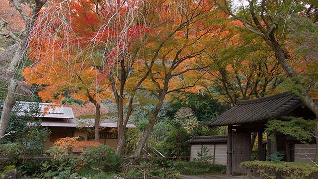 秋の瑞泉寺(瑞泉寺)