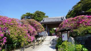 鎌倉 安養院源頼朝の菩提を弔うツツジの名所