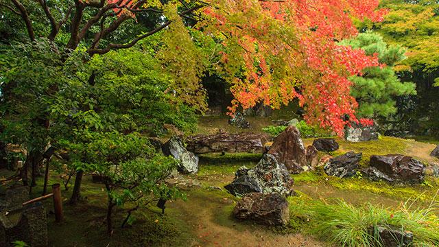 秋の圓徳院(圓徳院)