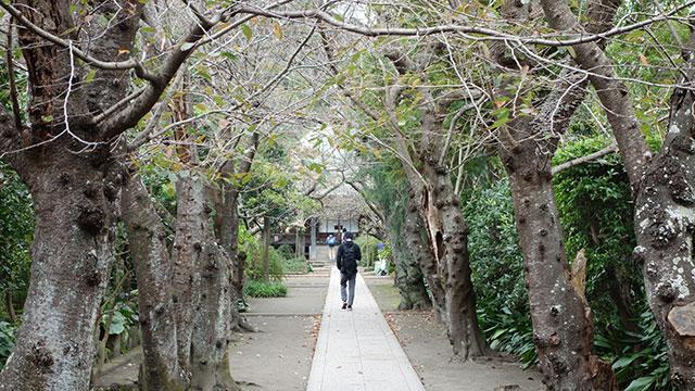 参道(極楽寺)