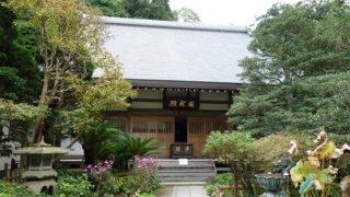鎌倉 成就院弘法大師修行の地でもあったアジサイの名所