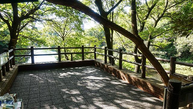第一展望台(柿田川公園)