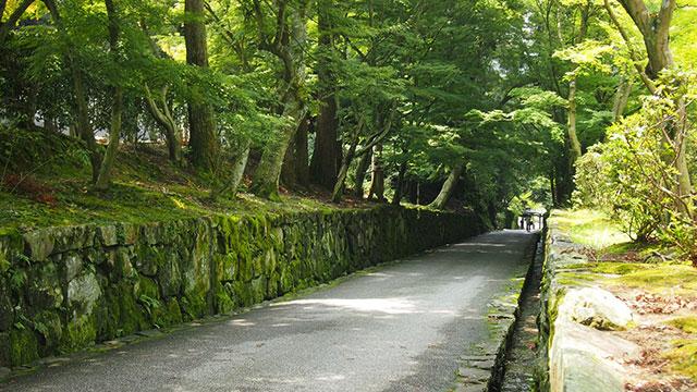 参道(興聖寺)