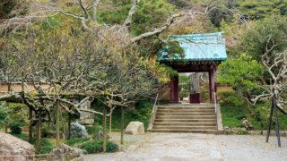 鎌倉 光則寺1年中花が楽しめる日蓮宗の寺院