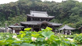 京都 三室戸寺1万株のアジサイが咲く宇治屈指の花の寺