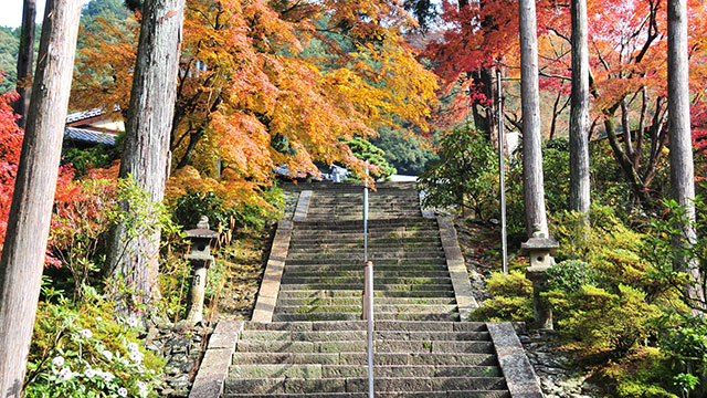 石段(三室戸寺)