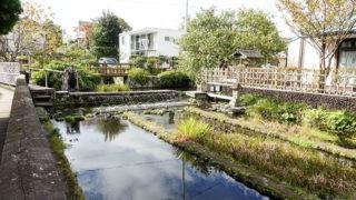 三島梅花藻の里きれいな水の中だけで育つ可憐な花が咲く遊水池