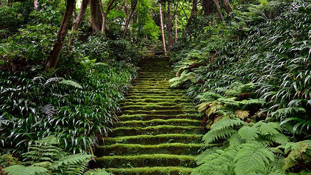 苔むした階段(妙法寺)