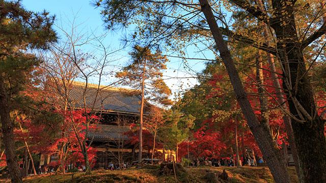 秋の法堂(南禅寺)