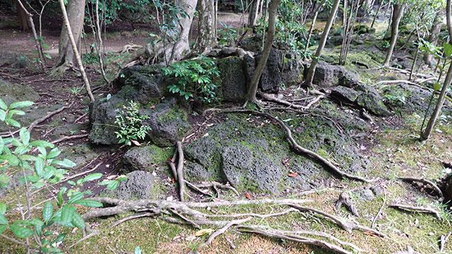 三島溶岩(楽寿園)