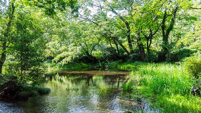 水辺の緑(楽寿園)