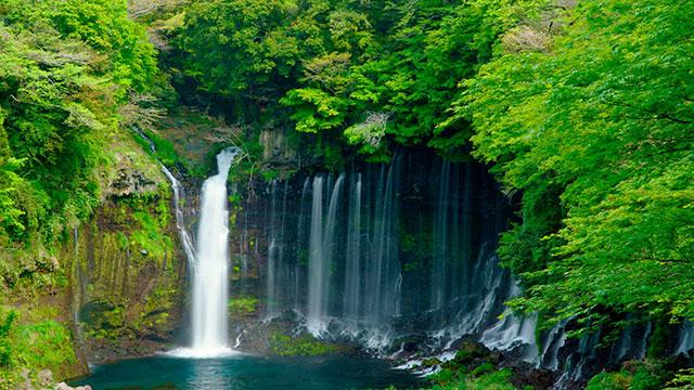 新緑の頃(白糸の滝)
