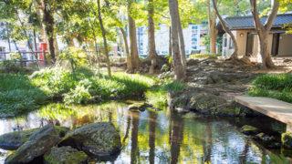 三島 白滝公園木々の緑や水の音が楽しめる親水公園