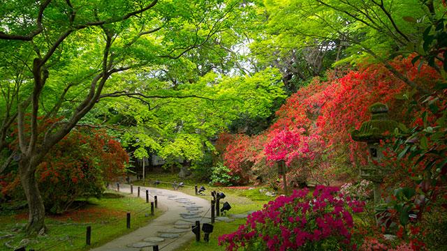 霧島の庭(青蓮院門跡)