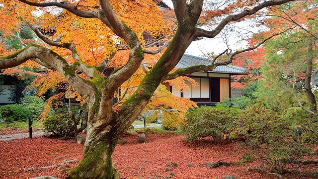 大森有斐の庭(青蓮院門跡)