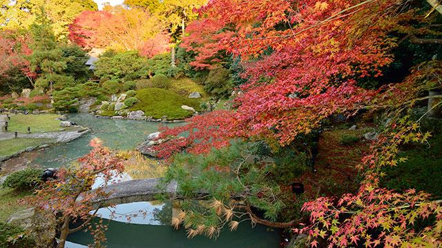相阿弥の庭(青蓮院門跡)