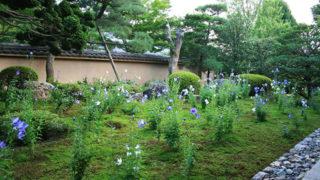 京都 天得院年に二回だけ公開される桔梗の庭で名高い寺院