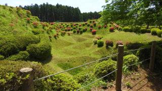 三島 山中城跡公園全国百名城にも選ばれた四季の花が美しい公園