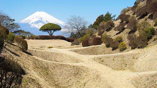 富士山(山中城跡公園)