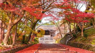 京都 毘沙門堂門跡動くふすま絵で知られる桜と紅葉が美しい寺院
