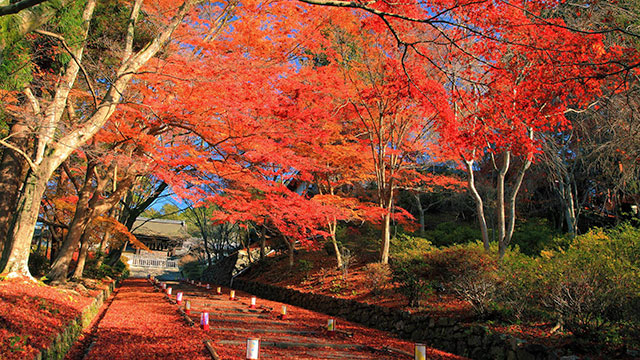 紅葉(毘沙門堂門跡)