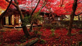 京都 厭離庵藤原定家の山荘跡に建つ散り紅葉の名所