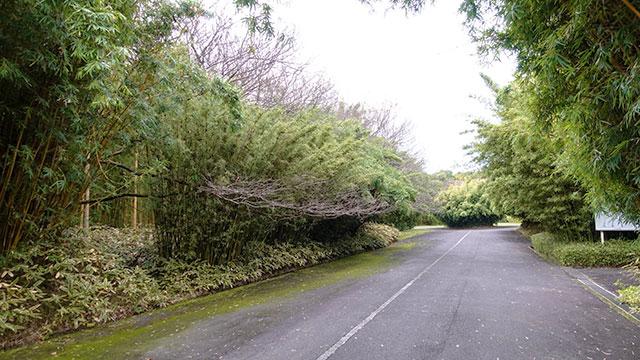 富士竹類植物園(長泉町観光)