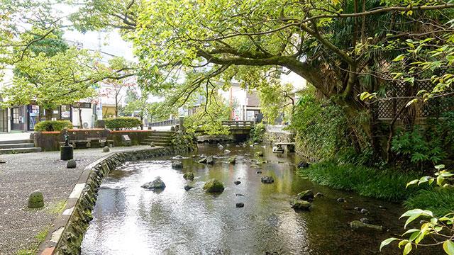 源兵衛川親水公園(三島観光)