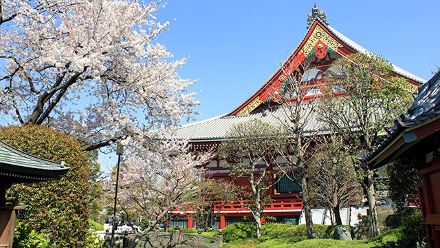 日本庭園から望む観音堂(観音堂)